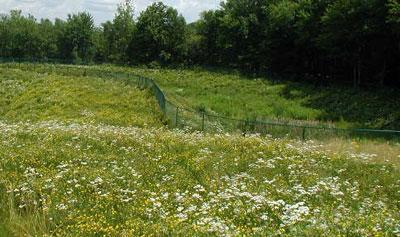 Soil Stabilization & Erosion Control